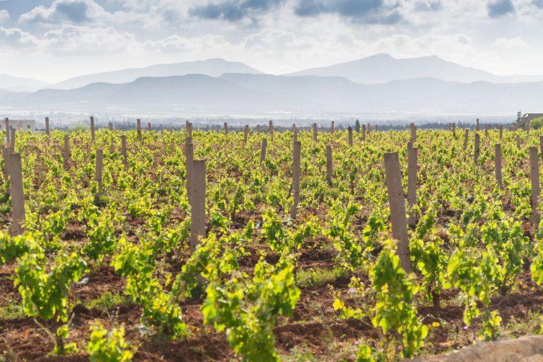 Wein Cap Bon