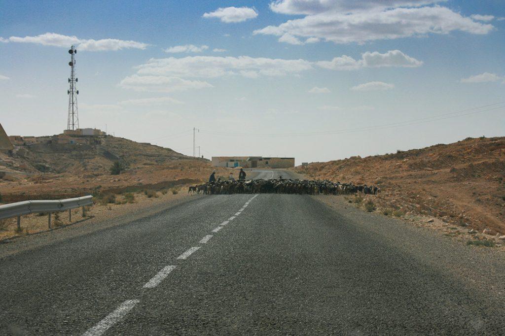 Ziegen Straße Tunesien